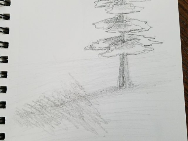 Pine Tree Graphite Sketch