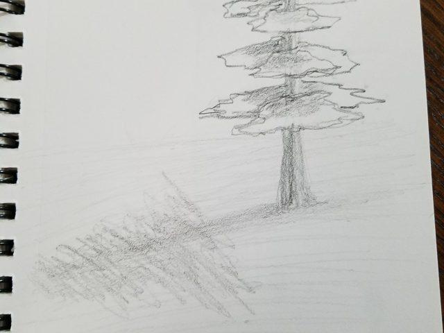 Pine Tree Graphite Sketch