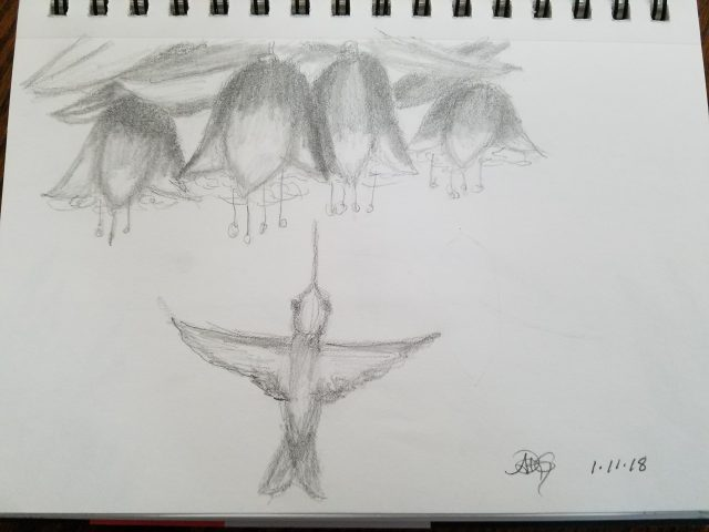 Hummingbird with Fuschias Sketch