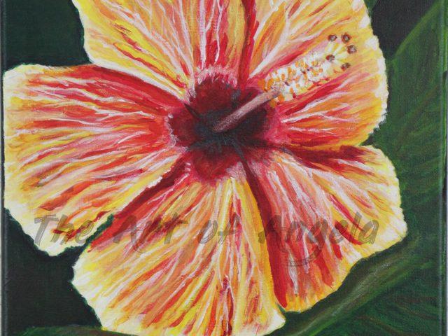 Sally's Hibiscus